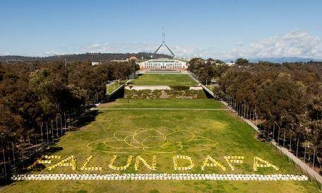 Гигантский лотос расцвел перед Парламентом Австралии